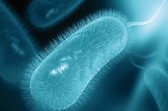 Curso de actualización de la infección por Helicobacter pylori  para Atención Primaria