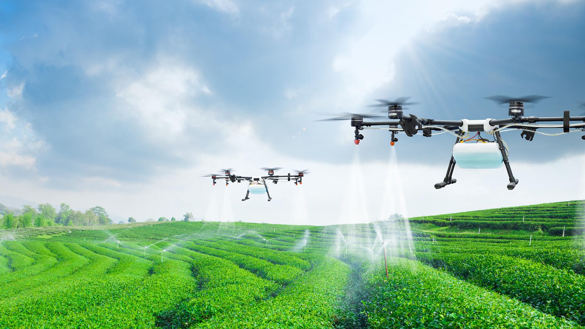 Tendencias en el sector agroalimentario: Una mirada al futuro del campo